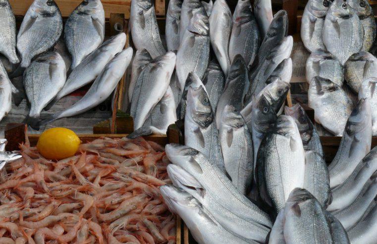 Transport ryb i ich szczególne wymagania